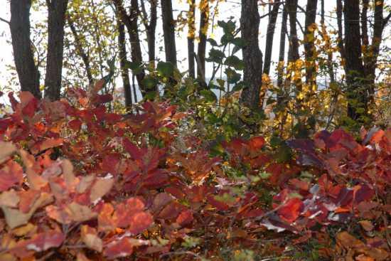 i colori dell'autunno - Cingoli (3049 clic)