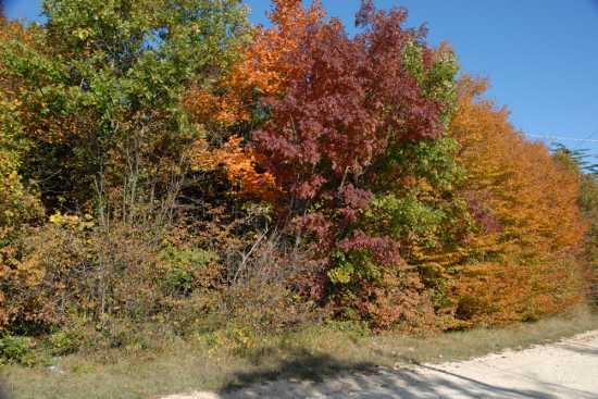 i colori dell'autunno - Cingoli (2363 clic)