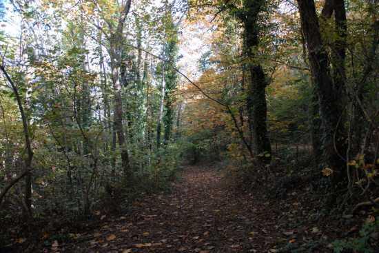 i colori dell'autunno - Cingoli (2187 clic)