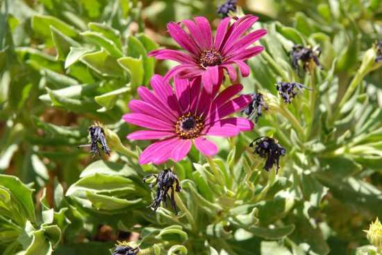fiori - Recanati (2406 clic)