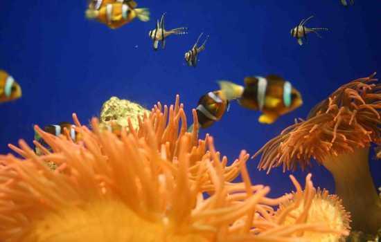 acquario di Genova (3580 clic)