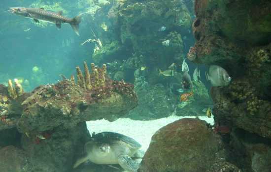 acquario di Genova (2074 clic)