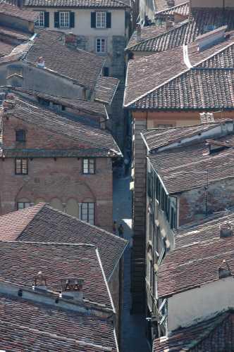 tetti di Lucca (2477 clic)