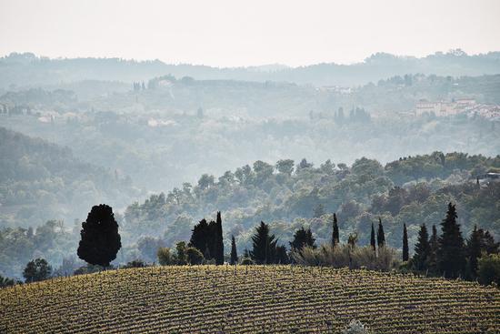 Tuscany - SAN MINIATO - inserita il 11-May-11