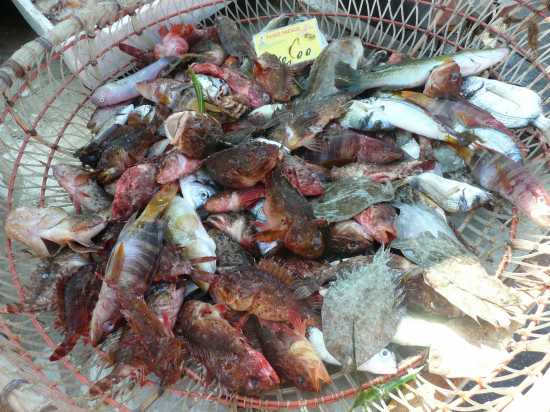Isola di Favignana  (TP)  la pesca (5787 clic)