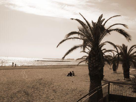 Palme e spiaggia - Nettuno (2747 clic)