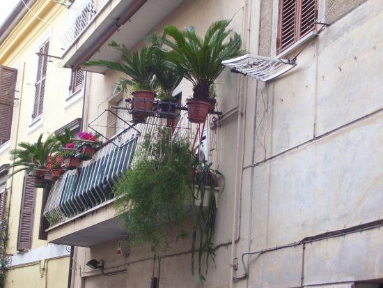 Pollice verde - Velletri (1131 clic)
