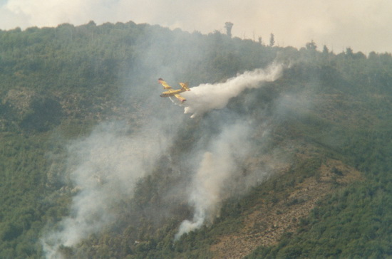 Un aereo spegne l'incendio su monte Artemisio - Velletri (3070 clic)