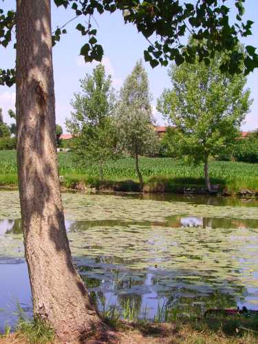 I Mantelli, laghetti intermorenici di Pozzolengo - Lago di Garda (2345 clic)