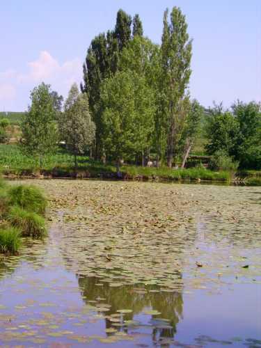 I Mantelli, laghetti intermorenici di Pozzolengo - Lago di Garda (2875 clic)