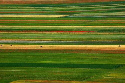Un tappeto di colori - Castelluccio (4468 clic)