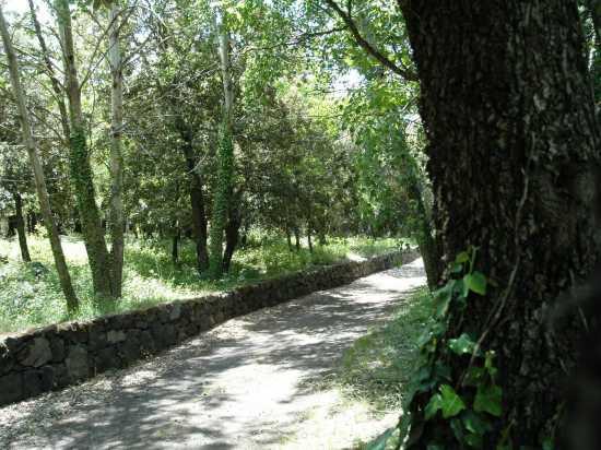 sentiero natura - Etna (2615 clic)
