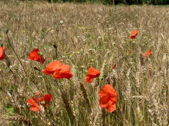 flora e fauna di Quinto sul Sile (3155 clic)