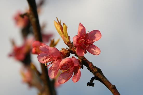 primavera (409 clic)