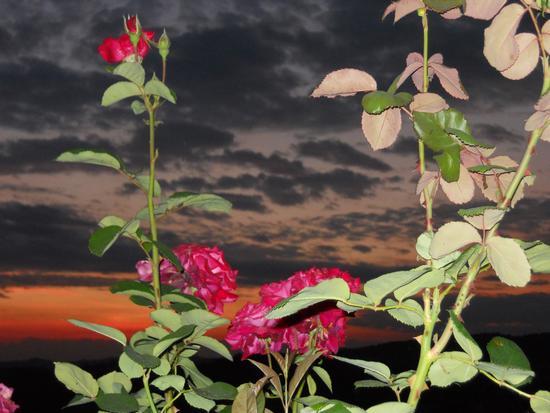 ....tramonto.... - Casorzo (1904 clic)