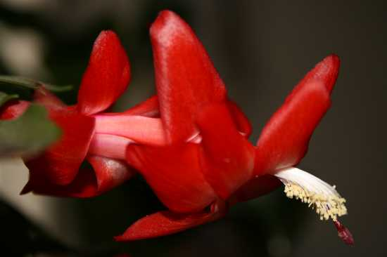 la pianta della suocera Maria - Casorzo (2050 clic)