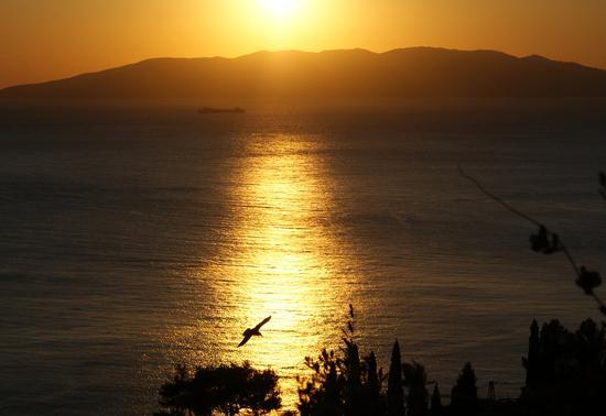 Veduta Isola del Giglio dall'Argentario - Monte argentario (2331 clic)