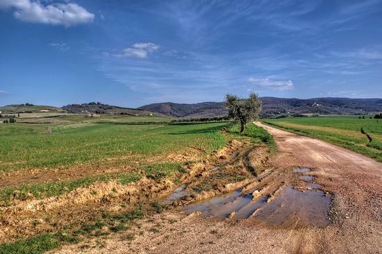 Strada fra gli ulivi - Casciana terme (2020 clic)