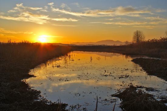 Padule di Fucecchio,tramonto - Castelmartini (1540 clic)
