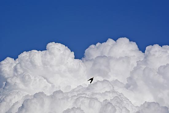 Gruccione fra le nuvole - ORCIATICO - inserita il 04-Jun-13