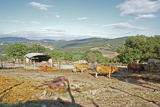 Scena rurale-Il Frassine(Gr) (1106 clic)