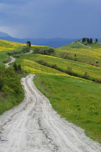 Strada serpeggiante - Castelfalfi (2577 clic)