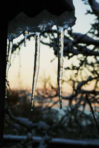 Candele di ghiaccio 2 - Orciatico (2331 clic)