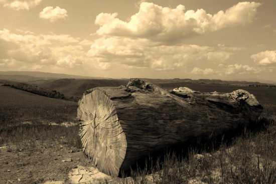 Tronco di legno sulla collina - Villamagna (2487 clic)