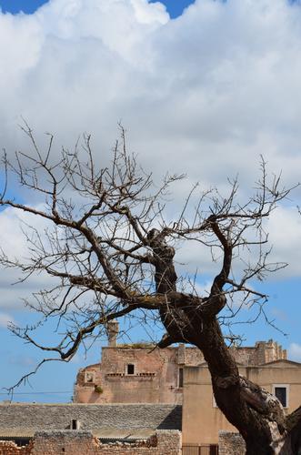 MASSERIA MUSACCO  - Turi (957 clic)