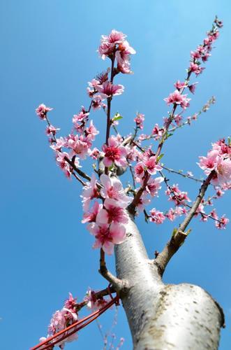 primavera - Turi (640 clic)