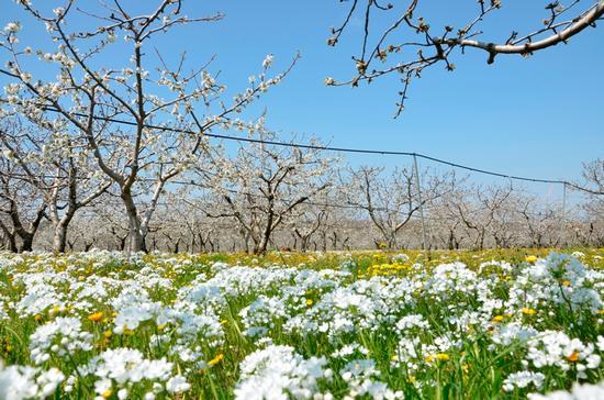 primavera - TURI - inserita il 13-Apr-15
