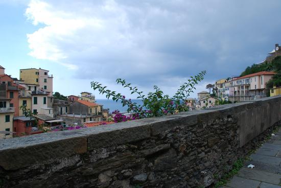 Riomaggiore (2597 clic)