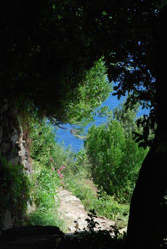 Sentiero azzurro - Corniglia (2077 clic)