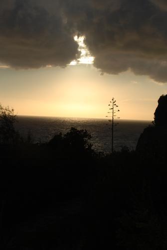 Macchia mediterranea - Corniglia (2134 clic)