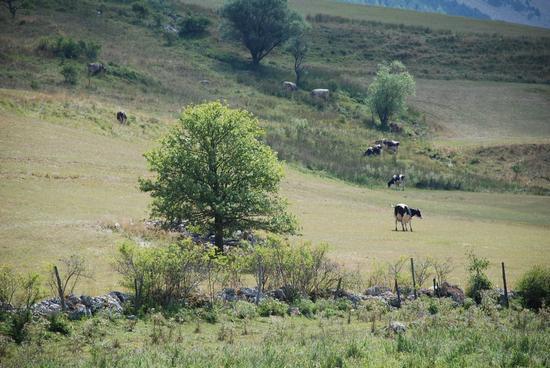 Paesaggio abruzzese.  - Pescocostanzo (2008 clic)