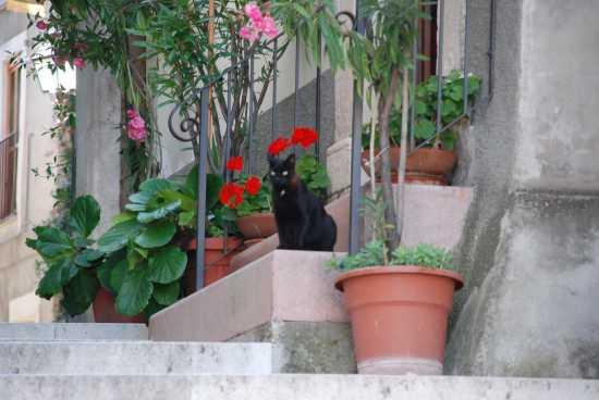 Gatto nero - Pacentro (1555 clic)