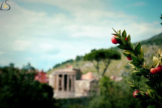 Tempio di Vesta - Tivoli (777 clic)