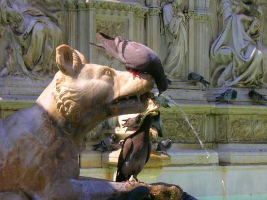 Fonte Gaia - Siena (1572 clic)