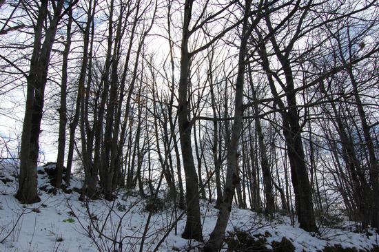 neve - Santo stefano in aspromonte (1648 clic)