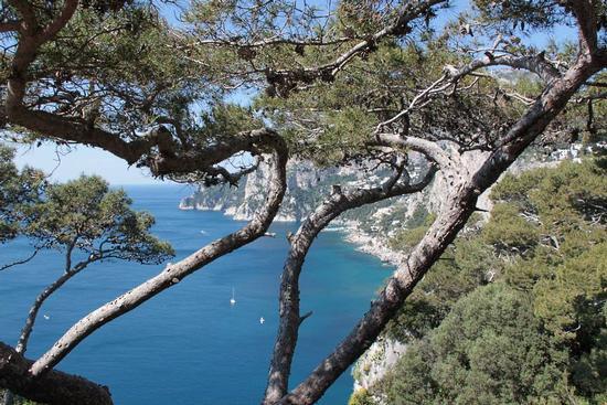 Capri (541 clic)