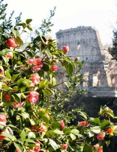 Il Colosseo - Roma (2027 clic)