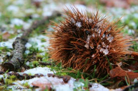 Inverno - Alghero (2436 clic)