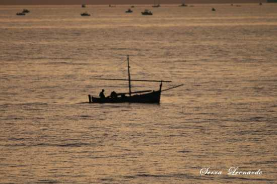 In mare - Alghero (2365 clic)