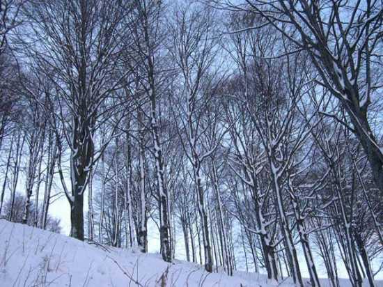 inverno nel bosco - Sedrina (1510 clic)