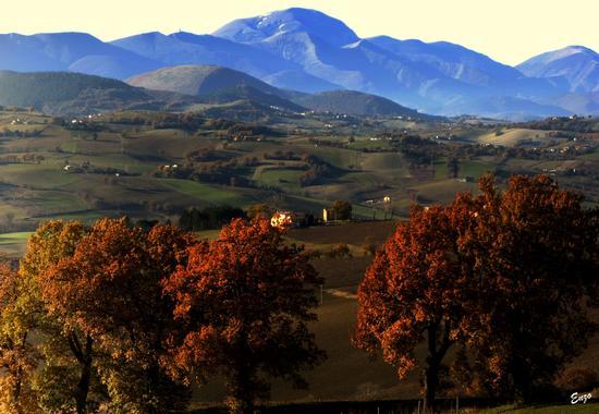 Splendide colline Marchigiane....... - Matelica (904 clic)
