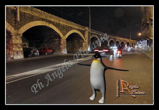 I pinguini a Catania (1431 clic)