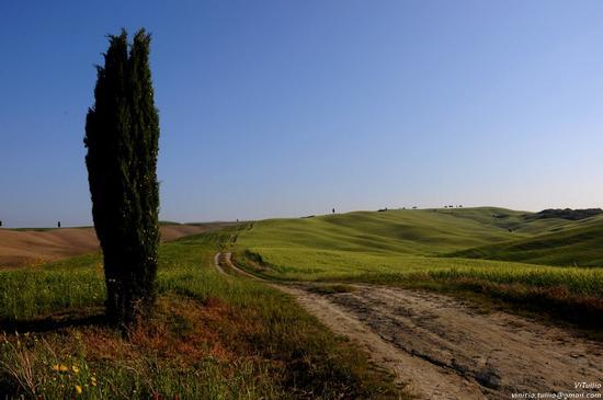 Toscana, Siena, Val d'Orcia - San quirico d'orcia (1932 clic)