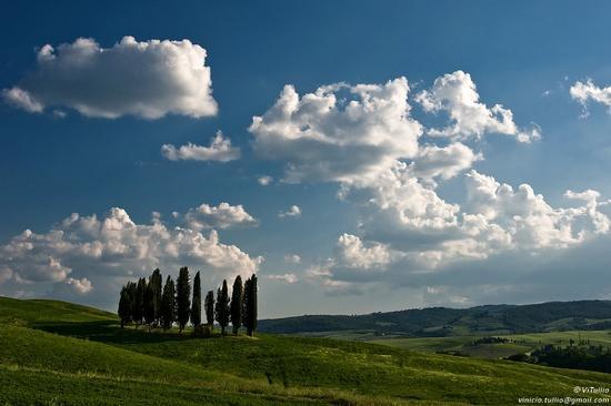 Cipressi e nuvole - San quirico d'orcia (2414 clic)