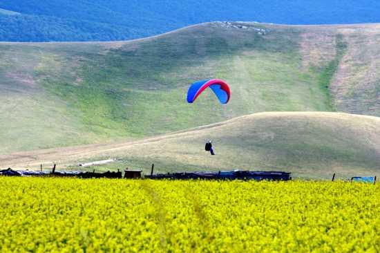 atterrare sul giallo - Castelluccio (4165 clic)