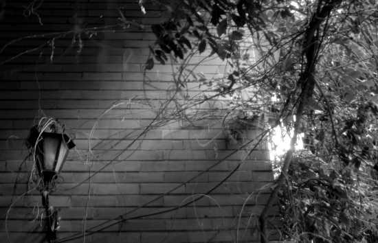 solo io e il vento  - Rocca priora (2101 clic)